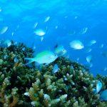 ニューカレドニア イルデパン島