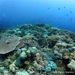 パプアニューギニア ワリンディーリゾート