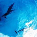 【ガーフ環礁ルート】2020/2/15発 第二弾!!ガーフ~アッドゥコース9日間 <最大15-16DV>