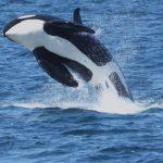 【夏旅6月~9月】知床クジラウォッチングツアー ANA利用3泊4日 *延泊可・フライトアレンジ可